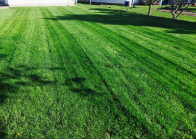 Freshly Cut Grass Image | Green Ninja Lawn Care Service London Ontario