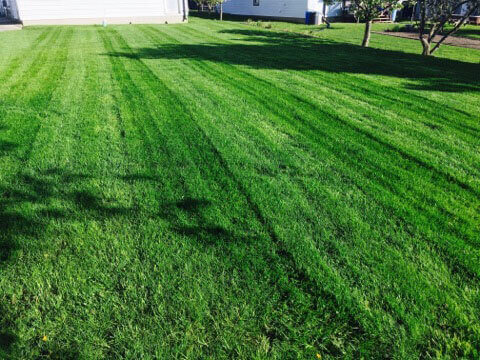 Freshly Cut Grass Image | Green Ninja Lawn Care Service London Ontario