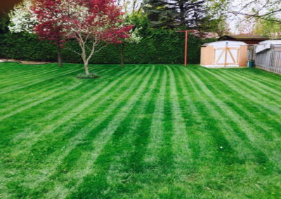 Green Lawn Stripes Image | Green Ninja Lawn Care Service London Ontario
