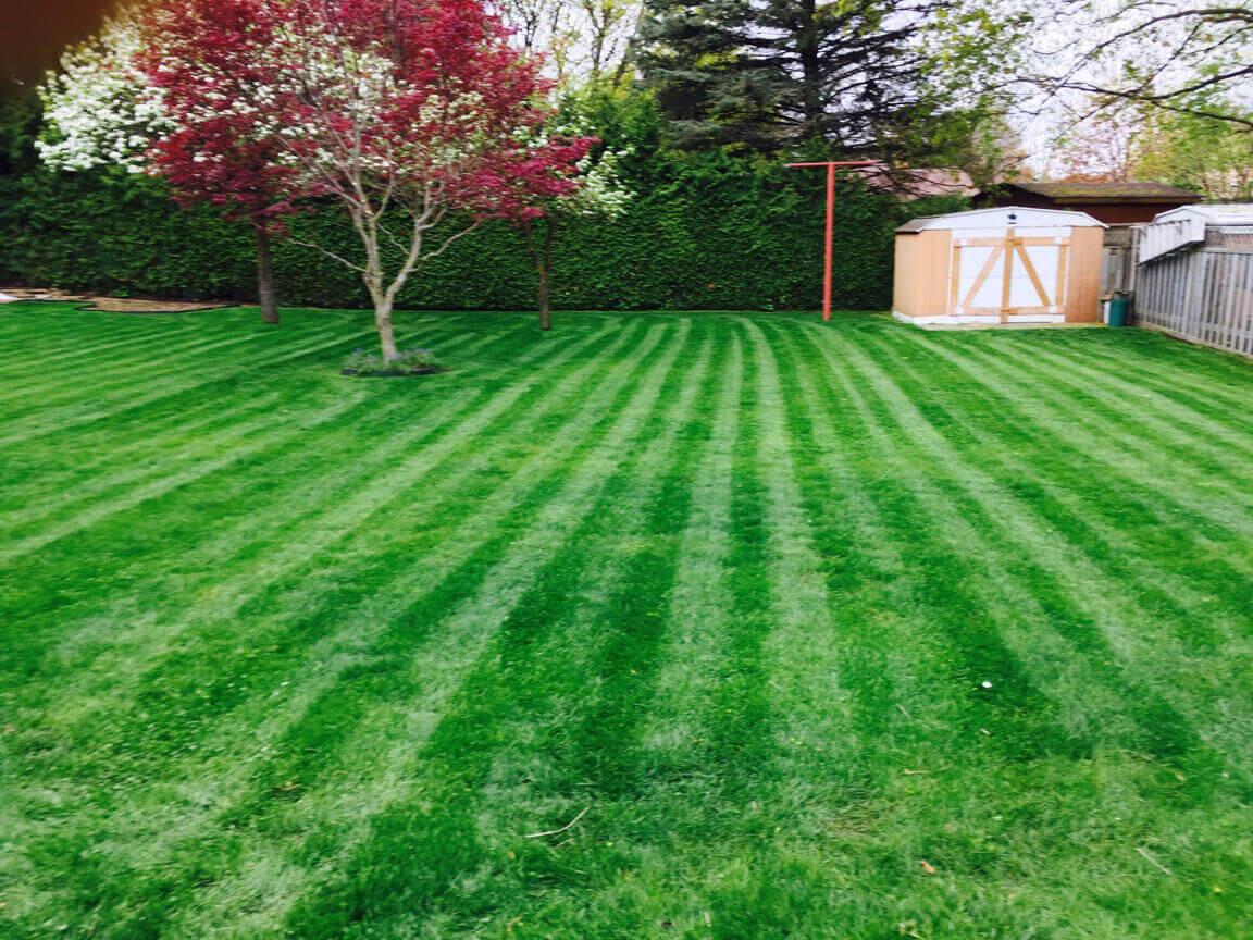 Green Lawn Stripes Image | Green Ninja Lawn Care Service London Ontario