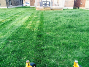 before after lawn image local lawn care company website london ontario
