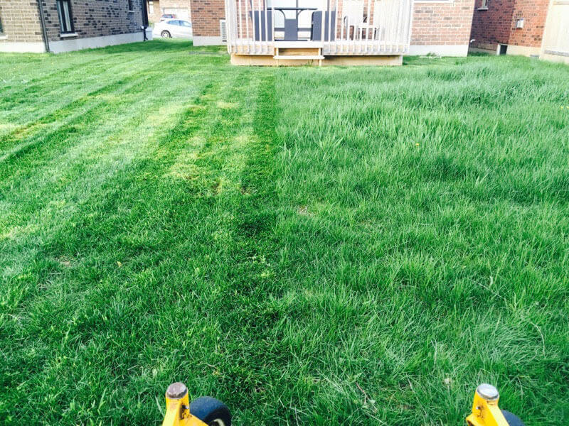 Before After Lawn Image | Green Ninja Lawn Care Service London Ontario