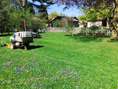 Mowing Grass Large Image | Green Ninja Lawn Care Service London Ontario