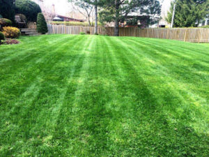 green backyard large image local lawn care company website london ontario