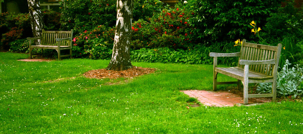 4 Ways You Could Be Destroying Your Lawn