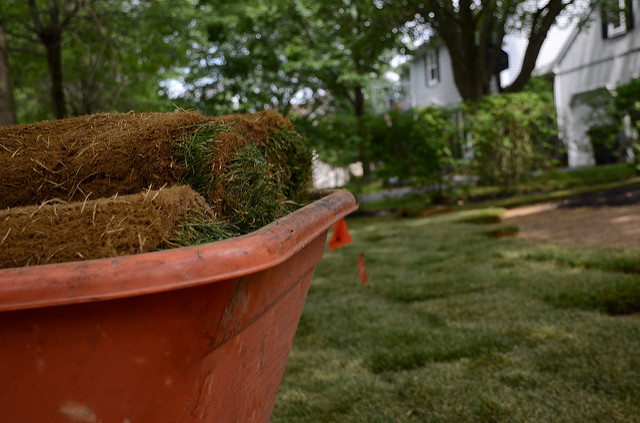 Sod: When To Use It, and How To Care For It