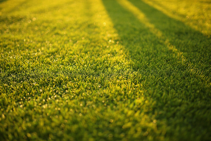 Spring Lawn Fertilization Tips
