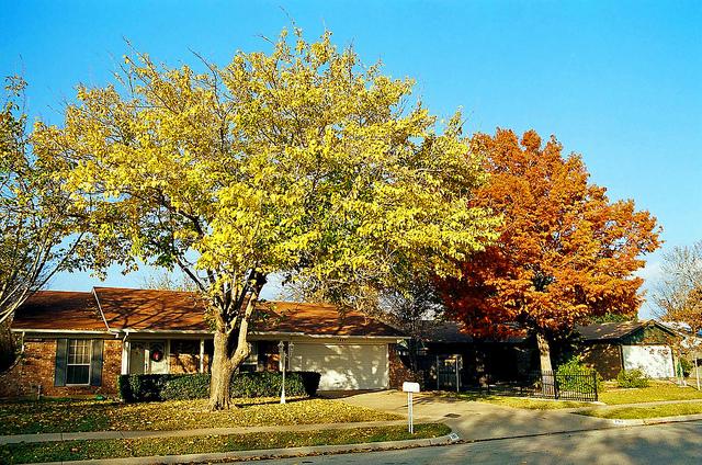 Proper Lawn Care For Fall