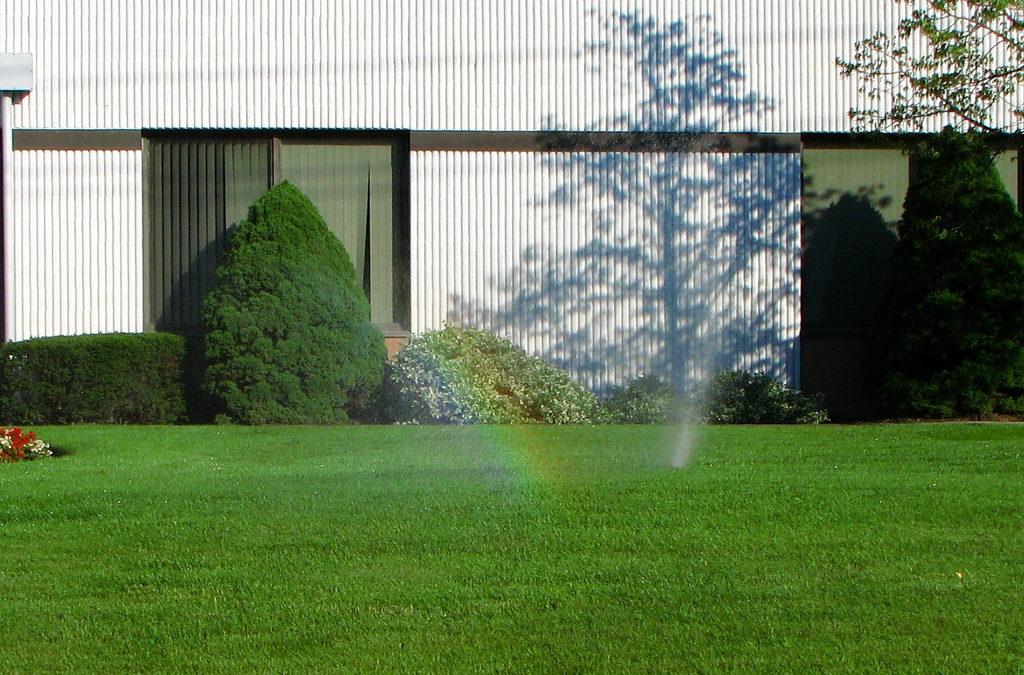 Lawn Watering 101