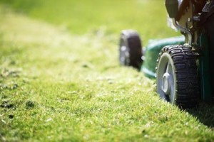 Fun Lawn Care Facts!