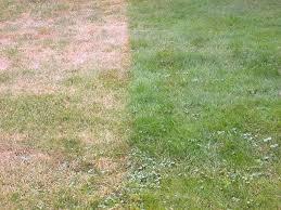 grass, not watered