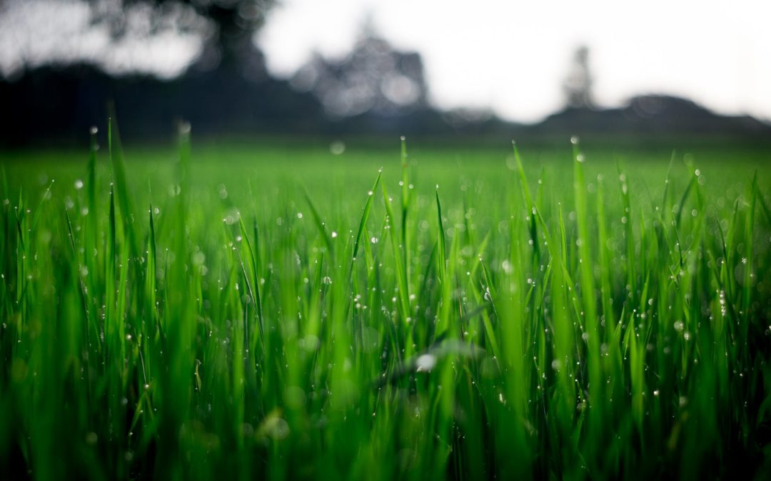 Should You Water The Lawn In The Morning Or The Evening?